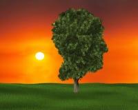 Drzewo wiedza, Ludzka głowa, środowisko royalty ilustracja