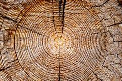 Drzewo wieka pierścionki Fotografia Royalty Free