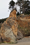 Drzewo wierzchołek ocean faleza przy działo plażą, Oregon Obrazy Stock