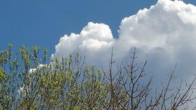 Drzewo wierzchołki w wiośnie Zdjęcia Royalty Free