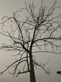Drzewo & wiosna zdjęcia royalty free