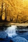 drzewo woda Zdjęcie Stock