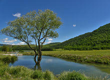 drzewo woda obrazy royalty free