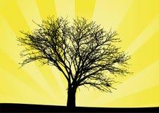 drzewo wschodu słońca royalty ilustracja