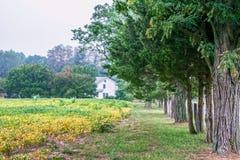 Drzewo wykładający pole zdjęcie stock