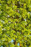 Drzewo wypełniający z lgreen okapu closup fotografia royalty free