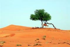 drzewo wzgórza Fotografia Stock