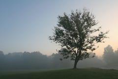 drzewo wzgórza Obrazy Stock