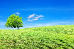 Drzewo, wzgórze, ekologii pojęcie obrazy stock