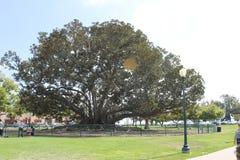 Drzewo życie obraz stock