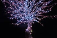 Drzewo życie Fotografia Stock