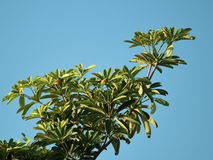 Drzewo życie Obrazy Royalty Free