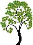 Drzewo z ślimakowatymi gałąź Obrazy Royalty Free