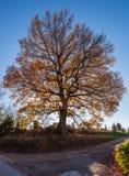 Drzewo z barwiącymi liśćmi na drogowym skrzyżowaniu w obszarze wiejskim fotografia stock