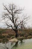 Drzewo z bezlistnymi gałąź Obrazy Royalty Free