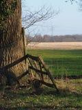 Drzewo z bluszczem przerastającym i płotowym obraz stock