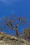 Drzewo z broda liszajem w Południowym Ekwador Obrazy Stock