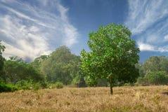 Drzewo z chmurami i niebieskim niebem obraz royalty free