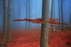 Drzewo z czerwienią opuszcza w błękitnej mgle podczas spadku Fotografia Stock