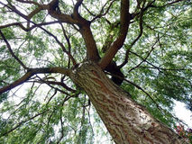 Drzewo z gałąź i liść Zdjęcia Stock