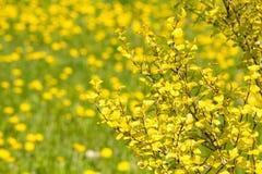 Drzewo z kolorów żółtych liśćmi, wiosen roślinami/ Zdjęcie Stock