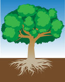 Drzewo z korzeniami i zwartym ulistnieniem, wektorowa ilustracja Ilustracja Wektor