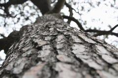 Drzewo z krakingową barkentyną Zdjęcia Royalty Free
