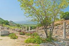 Drzewo z maczkiem kwitnie przy starożytny grek ruinami Zdjęcia Stock