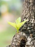 Drzewo z miękkimi liśćmi obrazy stock