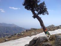 Drzewo z modlitewnymi flaga, India, Himachal Pradesh, buddhism Obraz Stock