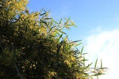 Drzewo z niebem Fotografia Royalty Free