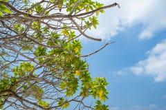 Drzewo z niebem i chmurami Zdjęcia Royalty Free