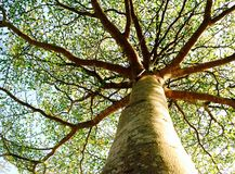 Drzewo z niebem na tle Fotografia Stock