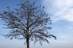 Drzewo z niebieskiego nieba tłem Zdjęcie Stock