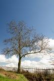 Drzewo z niebieskim niebem i żywopłotem Zdjęcie Royalty Free