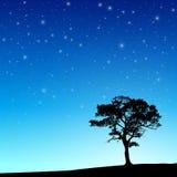Drzewo z nocnym niebem ilustracja wektor