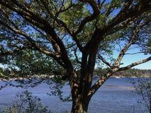 Drzewo z oceanu tłem obrazy stock