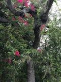 Drzewo z różowymi kwiatami Obrazy Royalty Free