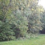 Drzewo z słońce lasu dniem Zdjęcie Stock