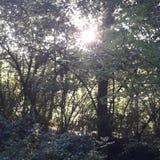 Drzewo z słońce lasu dniem Zdjęcie Royalty Free