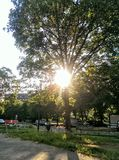 Drzewo z słońcem Obraz Stock