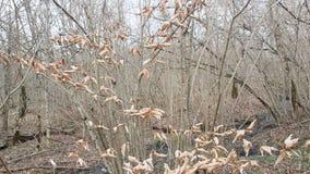 Drzewo z suchymi liśćmi zdjęcie wideo