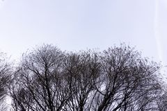 Drzewo z szarym niebo natury konturu parkiem fotografia stock