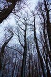 Drzewo z wielkimi i koślawymi gałąź obraz royalty free
