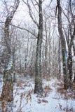 Drzewo z wielkimi i koślawymi gałąź zdjęcia royalty free