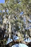 Drzewo z wiszącym łosiem amerykańskim zdjęcie stock
