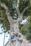 Drzewo z wrośniętym podpisuje wewnątrz lato Obraz Stock