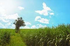 Drzewo z zielonej trawy łąką Obrazy Stock