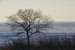 Drzewo za z liśćmi obraz royalty free