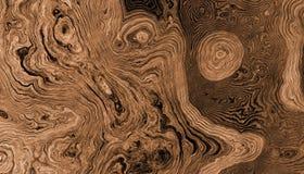Drzewo zakorzenia kędzierzawego tło royalty ilustracja